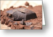Pieces Greeting Cards - Chocolate Greeting Card by Frank Tschakert