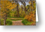 Autumn Scenes Photo Greeting Cards - Choices Greeting Card by Ken Smith