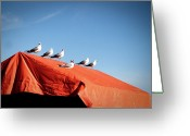 Tent Greeting Cards - Choir Of Seagulls Greeting Card by Photography by Alan Leong. ShearNation.com
