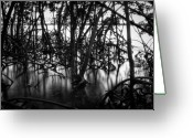 Skeletal Greeting Cards - Chokoloskee Mangroves Greeting Card by Rich Leighton