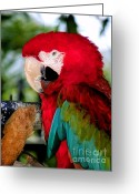 Exotic Birds Greeting Cards - Chowtime Greeting Card by Karen Wiles