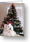 Paws Digital Art Greeting Cards - Christmas Card Dog Greeting Card by Vijay Sharon Govender
