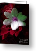 Fushia Greeting Cards - Christmas Cheer Greeting Card by Joyce Hutchinson