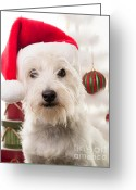Westie Greeting Cards - Christmas Elf Dog Greeting Card by Edward Fielding