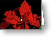 Christopher Holmes Photography Greeting Cards - Christmas Fire Greeting Card by Christopher Holmes