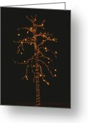 Decoration And Ornament Greeting Cards - Christmas Lights Outline A Tall Tree Greeting Card by Stephen St. John