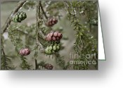 Masking Digital Art Greeting Cards - Christmas pine Greeting Card by Zachary Felts