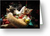 Nestled In Greeting Cards - Christmas Season w Two Kittens in Love - Kitty Cat Angels w Heads Up Nestled in a Basket of Baubles Greeting Card by Chantal PhotoPix
