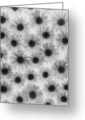 Floral Greeting Cards - Chrysanthemum Flowers Greeting Card by Graeme Harris