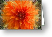 Flower Photograph Greeting Cards - Chrysanthemum Greeting Card by Tom Romeo