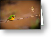 Tanzania Greeting Cards - Cinnamon-chested Bee-eater Greeting Card by Adam Romanowicz