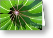 Green Leaves Greeting Cards - Circle Of Leaves Greeting Card by Dan Holm