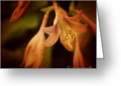 Flower Photography Greeting Cards - Cladis 03s Greeting Card by Variance Collections