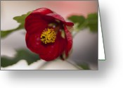 Designers Choice Photo Greeting Cards - Claret  Greeting Card by Don  Wright