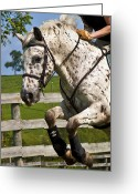 Dressage Photo Greeting Cards - Clean Round Greeting Card by East Coast Barrier Islands Betsy A Cutler