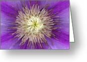 High Resolution Greeting Cards - Clematis Greeting Card by Christopher Gruver
