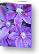 Radial Design Greeting Cards - Clematis Greeting Card by Donna McLarty