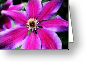 Northwest Flowers Greeting Cards - Clematis Flower Greeting Card by Cathie Tyler