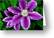 Purples Greeting Cards - Clematis Greeting Card by Julie  Grace