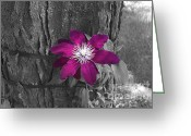 Barks Greeting Cards - Clematis Niobe Greeting Card by Deborah Smolinske