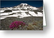 Snow Capped Greeting Cards - Cliff Penstemon (penstemon Serrulatus) Greeting Card by Bob Gibbons