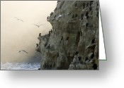Phalacrocorax Auritus Greeting Cards - Cliffs With Roosting Cormorants Greeting Card by Tim Laman