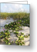 Dune Grass Greeting Cards - Climbing the Dunes Greeting Card by Marilyn Hunt
