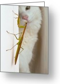 Mantis Greeting Cards - Close Encounter Greeting Card by Julie Niemela