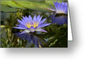 Generic Greeting Cards - Close Shot Of An Amazon Water Lily Greeting Card by Stephen Sharnoff