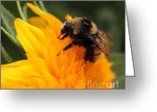 Teddybear Greeting Cards - Close-up Bee on Sunflower Greeting Card by Marjorie Imbeau