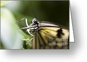 Beauty Mark Greeting Cards - Close up Greeting Card by Leslie Leda