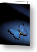 Copy Space Greeting Cards - Close-up Of A Blue Butterfly Greeting Card by Stockbyte