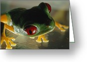 Red-eyed Frogs Greeting Cards - Close-up Of A Red-eyed Tree Frog Greeting Card by Paul Zahl