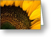 Pods Greeting Cards - Close-up Of A Sunflower Greeting Card by Todd Gipstein