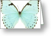 Indoors Photo Greeting Cards - Close-up Of A White Butterfly Greeting Card by Stockbyte