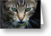 Kentucky Greeting Cards - Close Up Of Cat Greeting Card by Universal Stopping Point Photography