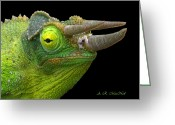 Horned Lizard Greeting Cards - Close Up Of Chameleon Greeting Card by A. R. MacNeil
