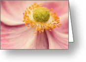 Anemone  Greeting Cards - Close Up Of Flower Greeting Card by Jody Trappe Photography