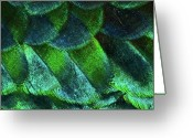Natural Pattern Greeting Cards - Close Up Of Peacock Feathers Greeting Card by MadmàT