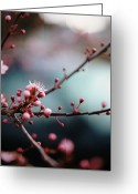 Pink Flower Greeting Cards - Close-up Of Plum Blossoms Greeting Card by Danielle D. Hughson