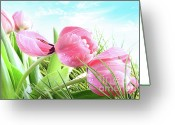 Florist Greeting Cards - Close-up of  Spring tulips  Greeting Card by Sandra Cunningham