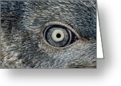 Image Type Photo Greeting Cards - Close Up Of The Mosaic Eye And Plumage Greeting Card by Jason Edwards