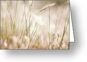 Volcanic Greeting Cards - Close Up Of Windswept Grasses, Dusk Greeting Card by Paul Edmondson