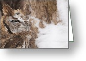 Lichen Image Greeting Cards - Close up Red Screech Owl Greeting Card by Cindy Lindow