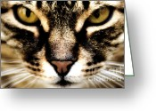 Feline Greeting Cards - Close up shot of a cat Greeting Card by Fabrizio Troiani