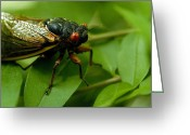 Cicadas Greeting Cards - Close View Of A Red-eyed Cicada Sitting Greeting Card by Todd Gipstein