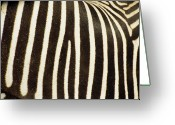 Black Fur Greeting Cards - Close View Of A Zebras Stripes Greeting Card by Stacy Gold