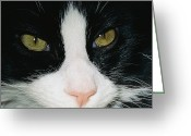 Germantown Photo Greeting Cards - Close View Of Black And White Tabby Cat Greeting Card by Brian Gordon Green