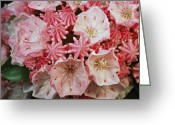 Mountain Laurel Greeting Cards - Close View Of Blossoming Mountain Greeting Card by Darlyne A. Murawski