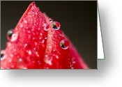 Close Views Greeting Cards - Close View Of Drops Of Water On A Red Greeting Card by Todd Gipstein